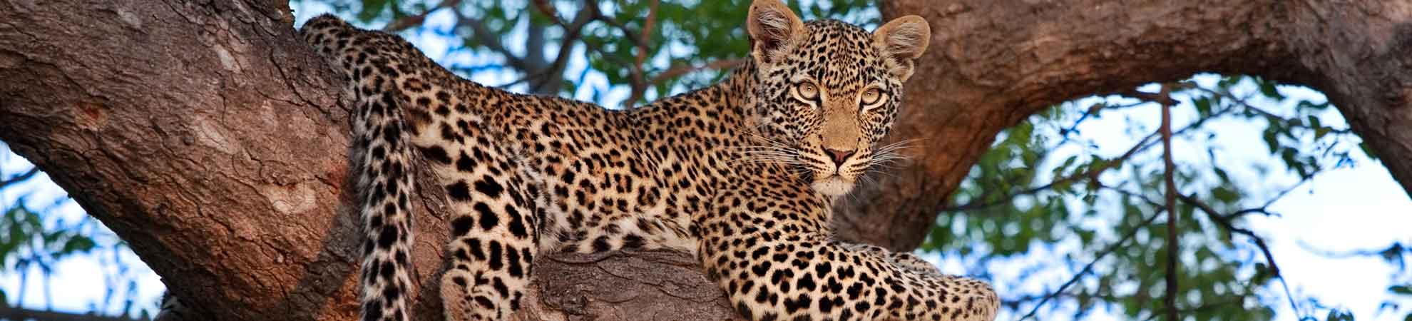 Safari guidé en 4x4 au lever du soleil dans la Sabi Sand Game Reserve