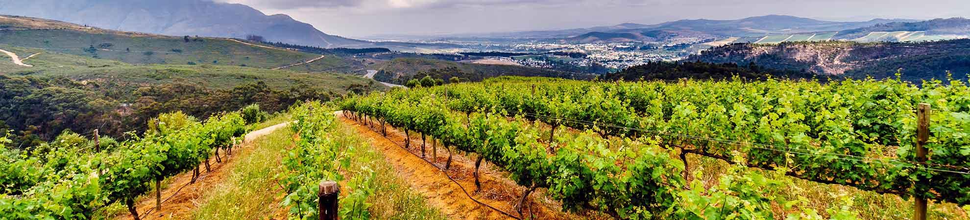 La route des vins d'Afrique du Sud