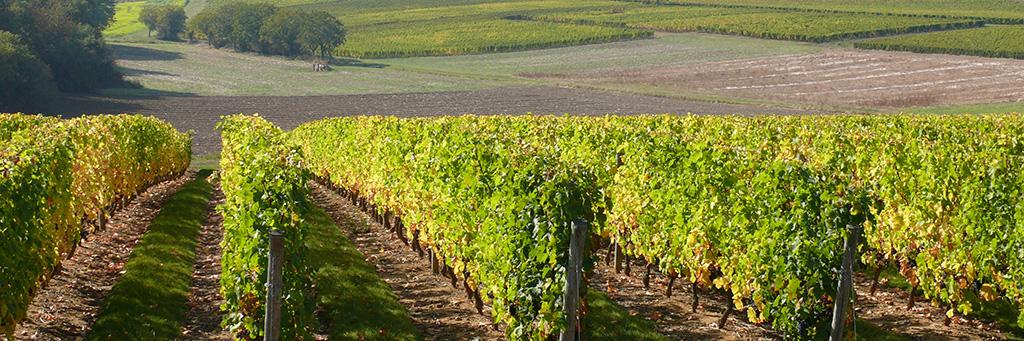 Les vignobles de la Napa Valley