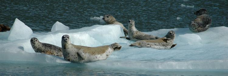Safari d'observation des phoques à Hvammstangi