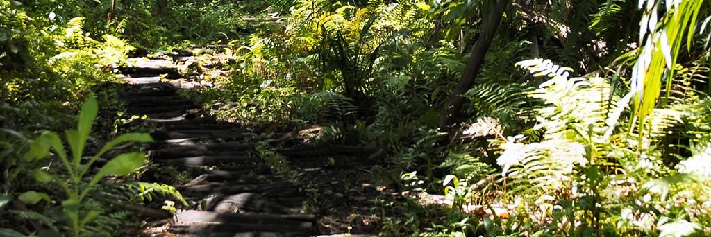 Visite de la forêt de Joziani