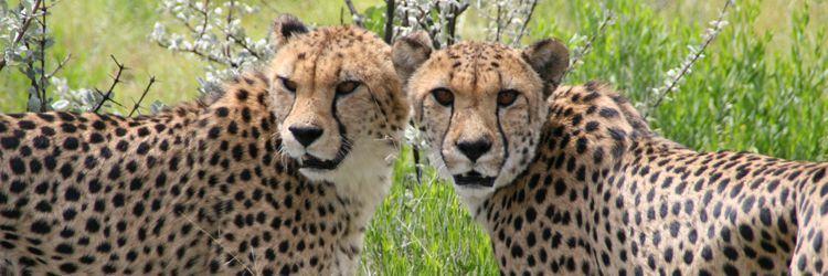 Safari guidé en 4x4 au Kruger