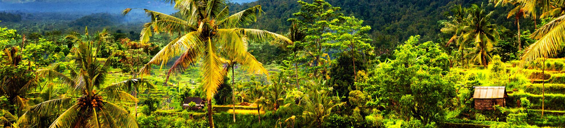Comportements à éviter lors de votre circuit à Bali