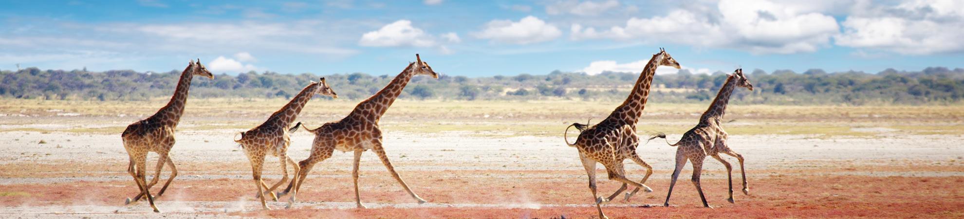 Namibie voyage organisé