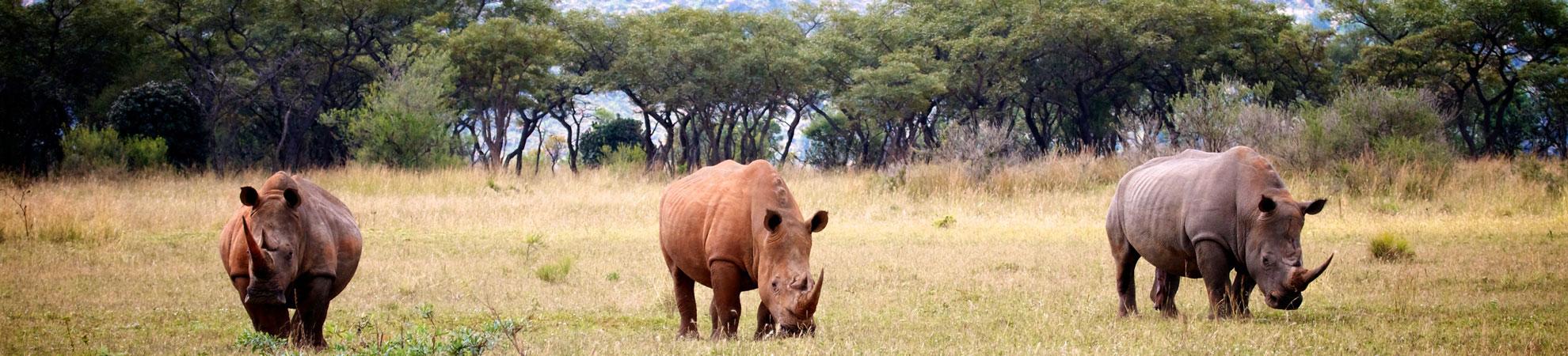 Safari Photo Kenya