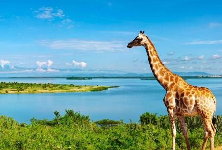 Ouganda, perle de l'Afrique