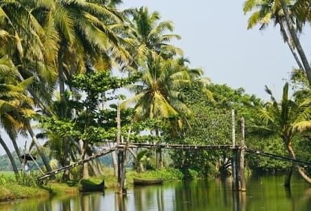 Trésors verts d'Inde du Sud