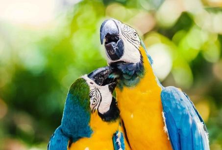 Ma famille en Amazonie