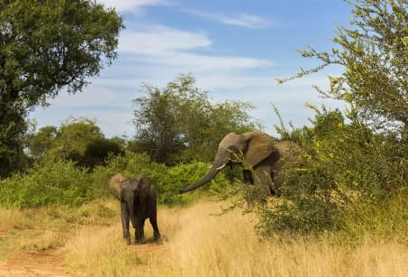 Capetown, Kruger et merveilles du Mpumalanga
