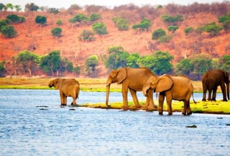 Un rêve au Botswana