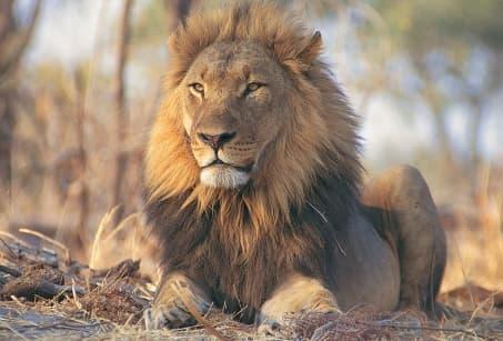 Grandeur Kenya
