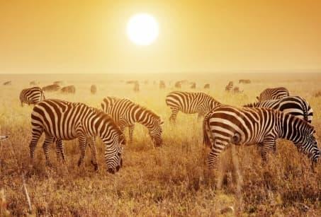 Tanzanie : Randonnée et Safari