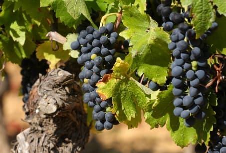 Vignobles et Bodegas du Chili