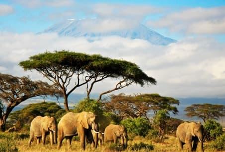 Le Kenya, de la savane à l'océan Indien