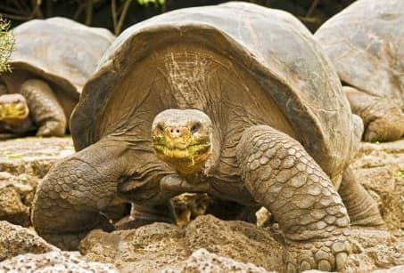 Extension Croisière aux Galapagos