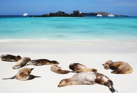 Extension : D'îles en îles aux Galapagos