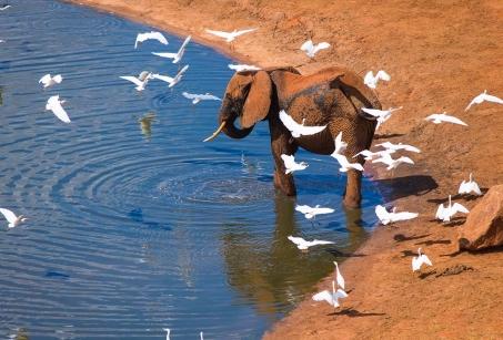 Flying Safari dans le Sud et plage de rêve