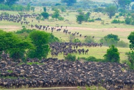 L'aventure de la Grande Migration