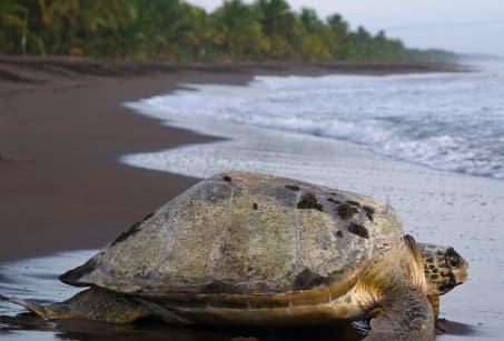 Plages et volcans du Costa Rica