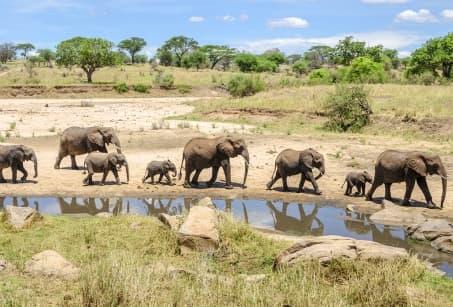 Tanganyika et légendes de Zanzibar, en famille