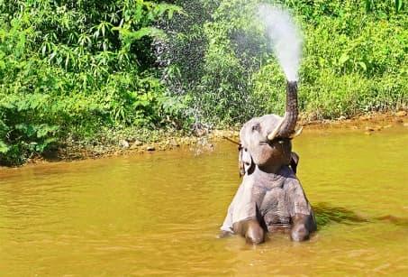 Idylle au Cambodge