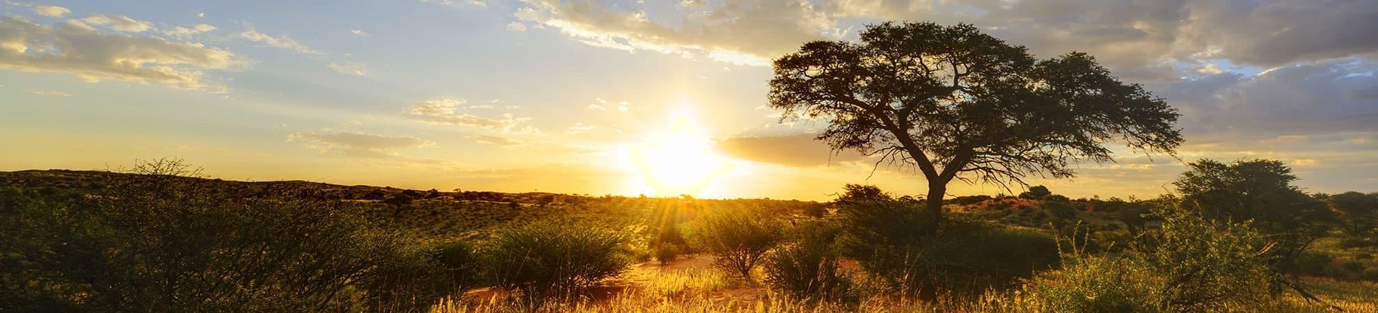 Voyage Le désert du Kalahari - Namibie