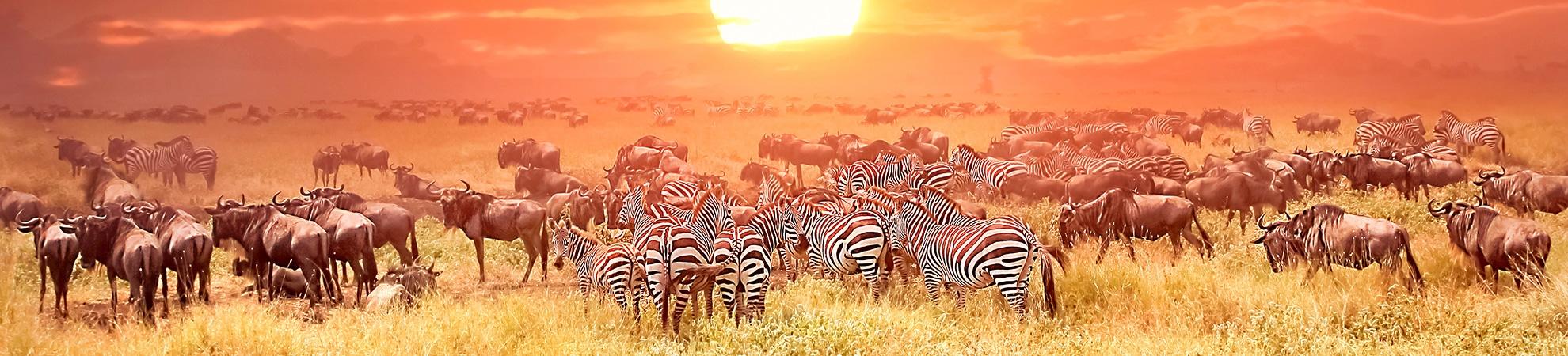 Toutes nos activités en Afrique