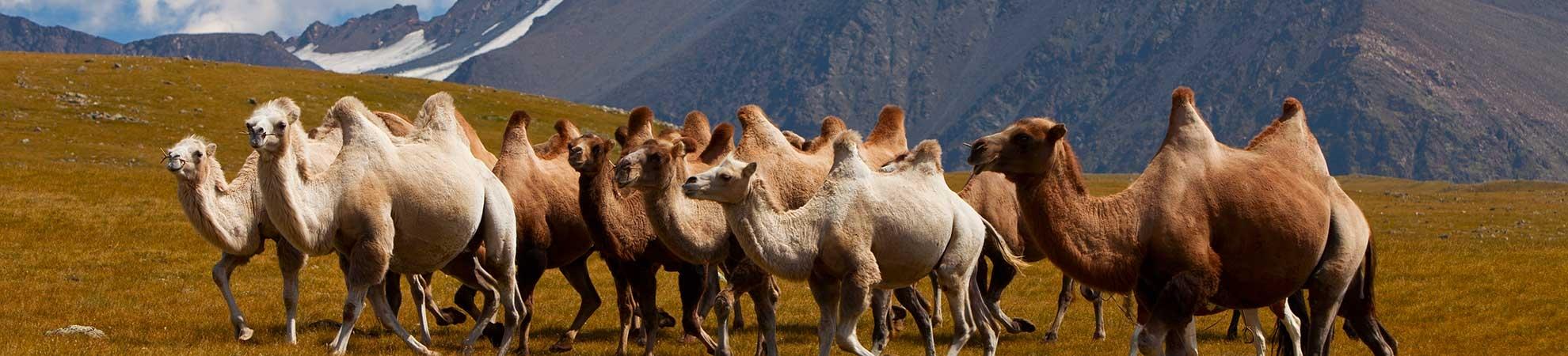 Informations pratiques Fiche pays Mongolie