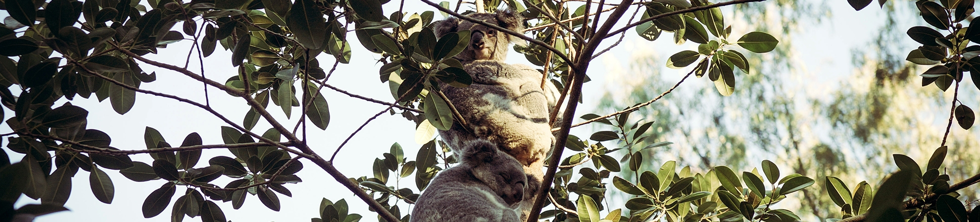 Séjour Australie
