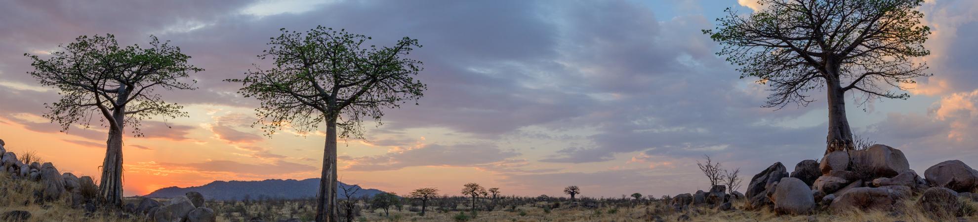 Partir en Tanzanie