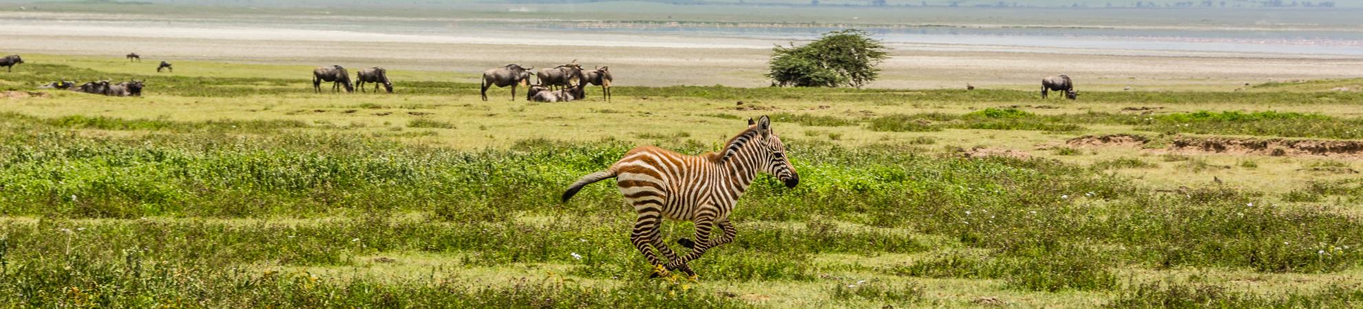 Sejour Tanzanie