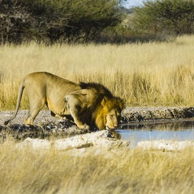 Central Kalahari Game Reserve Botswana