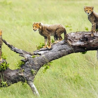 Découvrir la Moremi Game Reserve