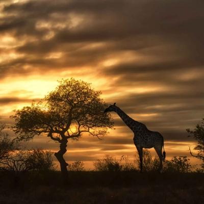 Safari en 4x4 au coucher du soleil