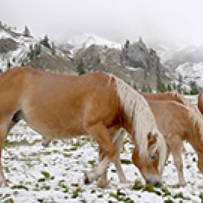 Balade à cheval dans la péninsule de Snaefellsnes