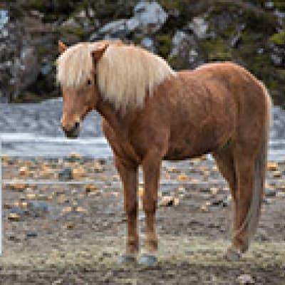 Balade à cheval et terroir
