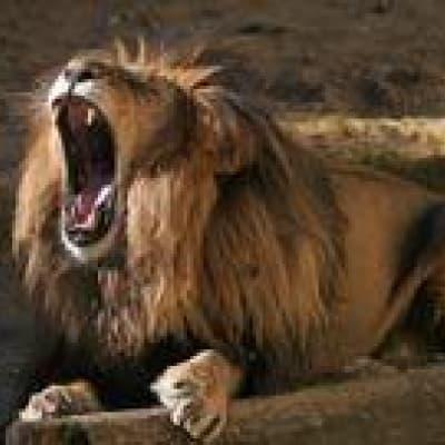 Deux activités au choix au Chobe Safari Lodge