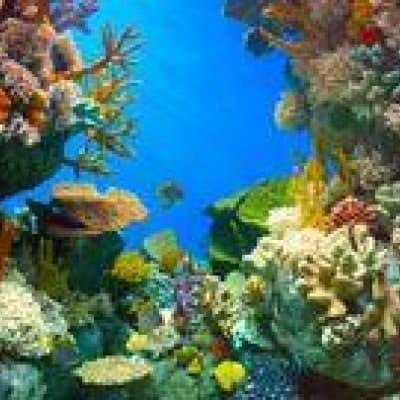 """Entrée à l'Aquarium """"Two Oceans"""""""