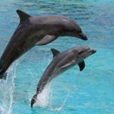 Une croisière avec les dauphins et l'excursion à Sandwich Harbour en 4x4