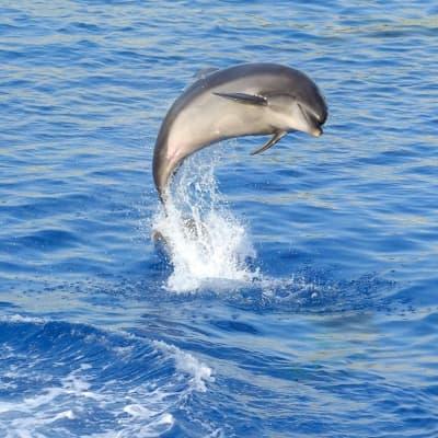 Rencontres avec les baleines et les dauphins!