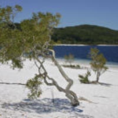 Excursion de deux jours sur Fraser Island