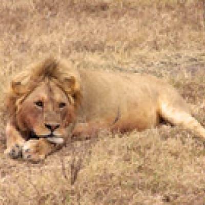 Randonnée dans le parc de national d'Arusha