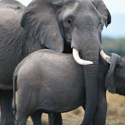 Safari dans le parc d'Estosha