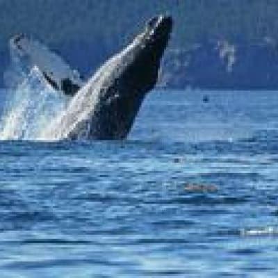 Observation des dauphins et des baleines à Dominical