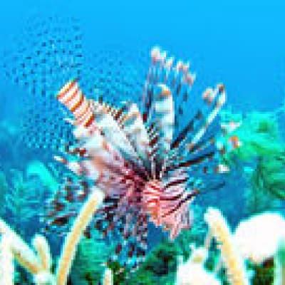 Découverte de Hol Chan Marine Reserve