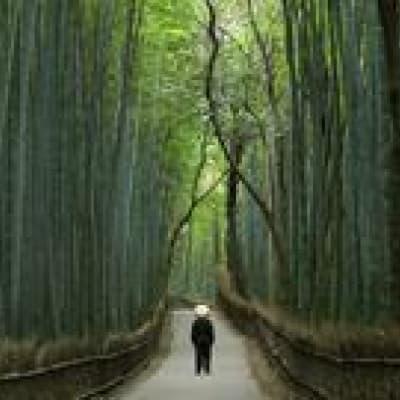 Kyoto et ses 17 sites inscrits au Patrimoine mondial de l'Unesco
