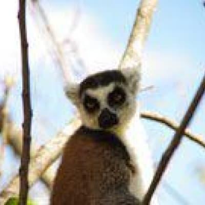 Visite de Lémuria Land