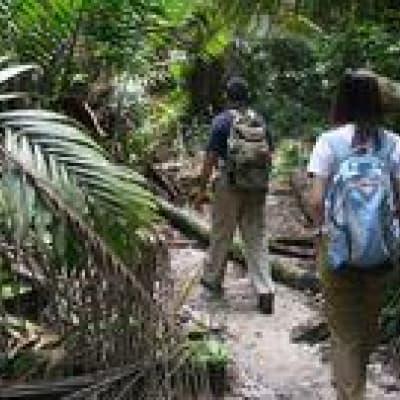 A la découverte de la rafflésie dans le parc de Gunung gading