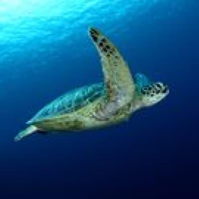 Rantau Abdang Turtle Beach