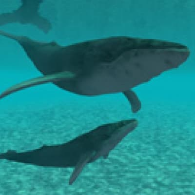 Rencontre avec les dauphins et les baleines